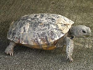 [turtle 1]