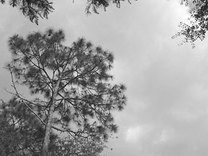 [looking up]