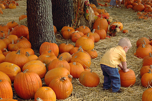 [click here for more pumpkin patch photos]