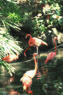 [flamingos in the mist]